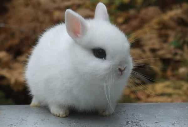 cuantas-razas-de-conejos-hay-5