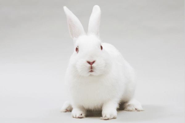 cuantas-razas-de-conejos-hay-8