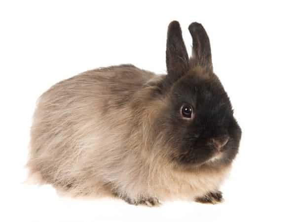 cuantas-razas-de-conejos-hay-9