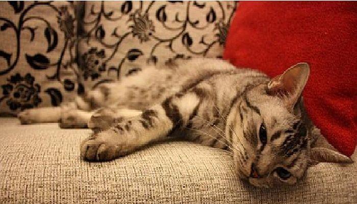 los gatos con gripe