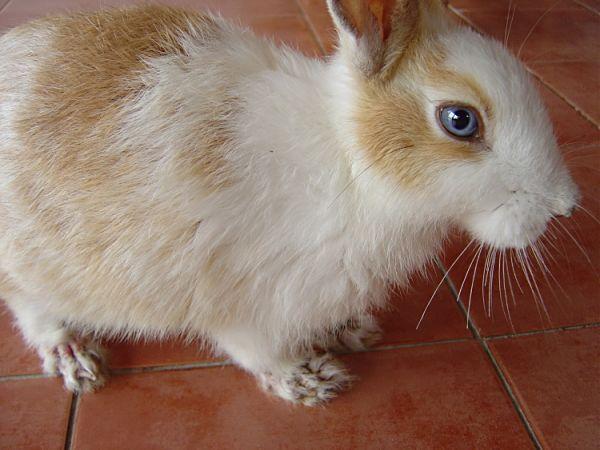 sarna-en-conejos-2