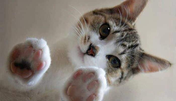 diarrea en gatos bebé