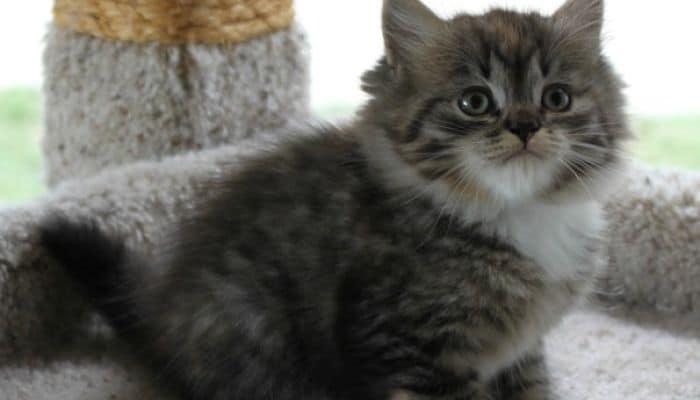 la Enrofloxacina En Gatos