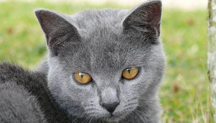 uso de la Enrofloxacina En Gatos