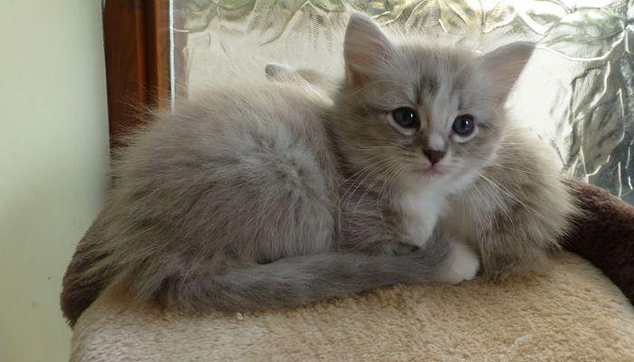 Enrofloxacina En Gatos