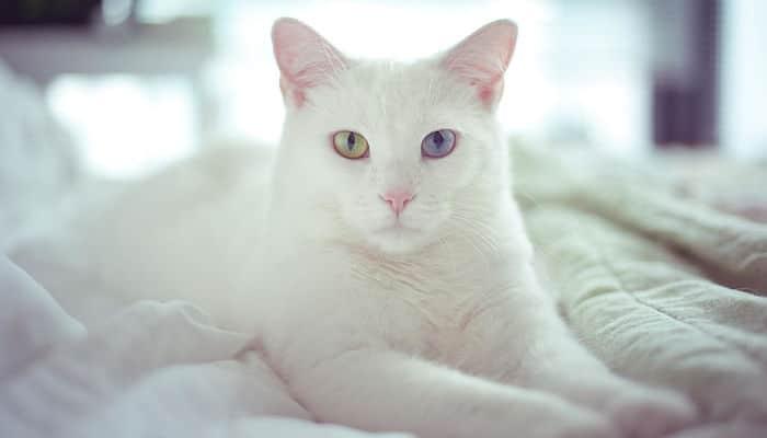 los gatos y la ivermectina