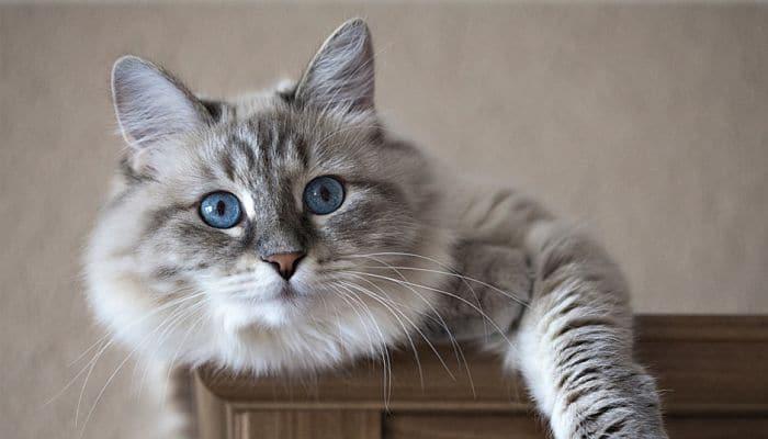 Conoce los Parásitos Intestinales En Gatos