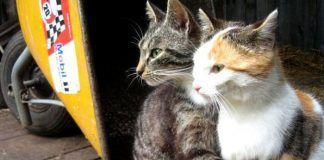 Cómo hacer que dos gatos se lleven bien