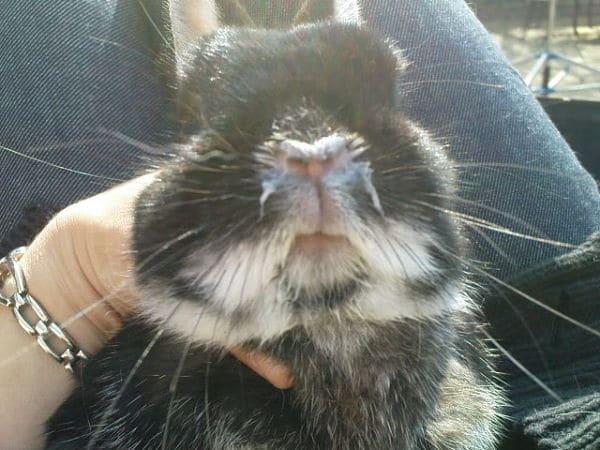 enfermedades-de-los-conejos-2