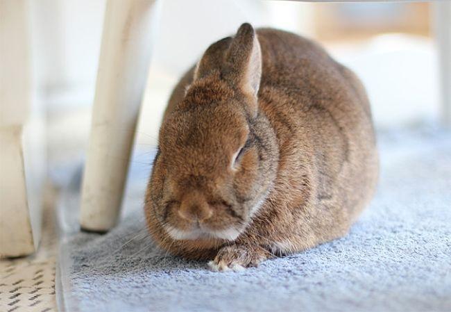 enfermedades-de-los-conejos-5