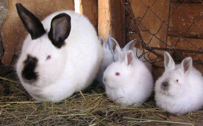 enfermedades-de-los-conejos-7