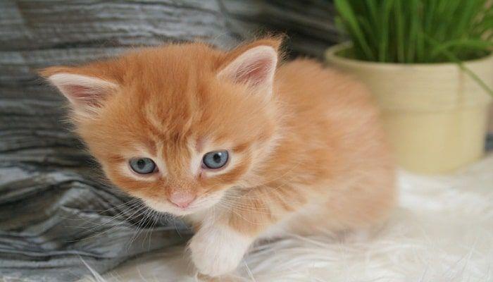 los gatos que defecan en el jardín