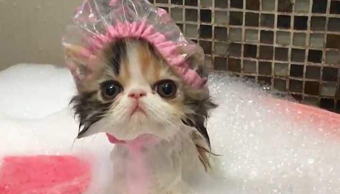 Hay que bañar a los gatos