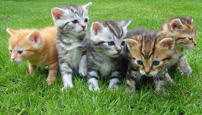 gatos con nombres en inglés