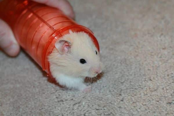 juguetes-para-hamsters-7