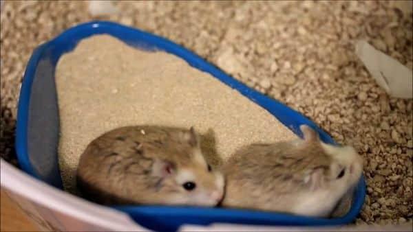 juguetes-para-hamsters-8