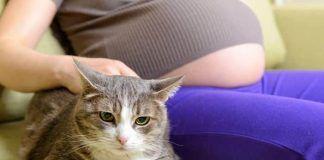 qué enfermedades causan los gatos a las mujeres