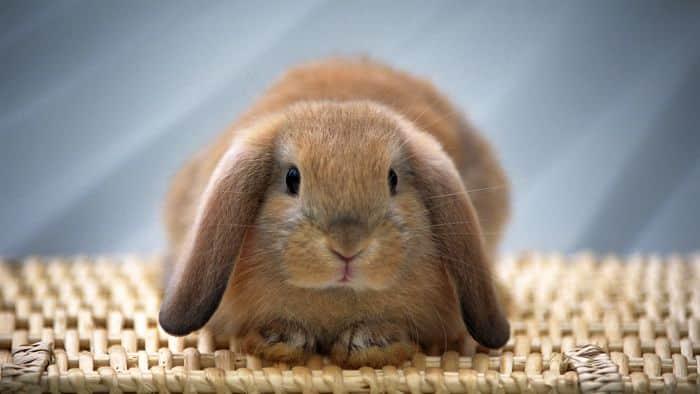 beneficios-de-tener-un-conejo-1