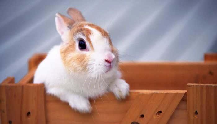 beneficios-de-tener-un-conejo-2
