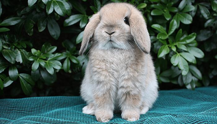 conejos-para-ninos-1