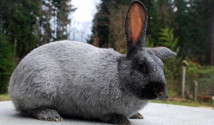 conejos-para-ninos-4