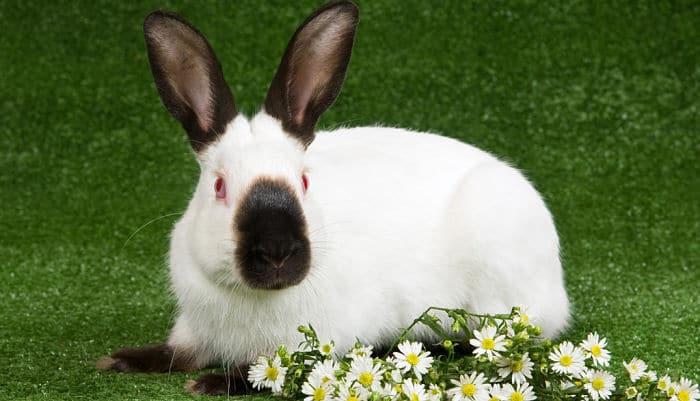 conejos-para-ninos-5