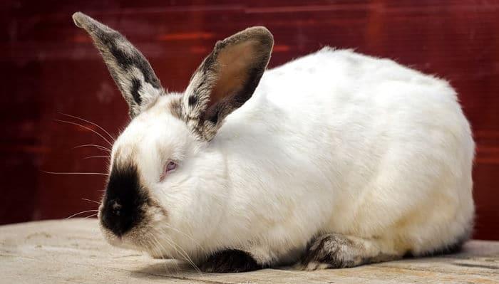 conejos-para-ninos-7