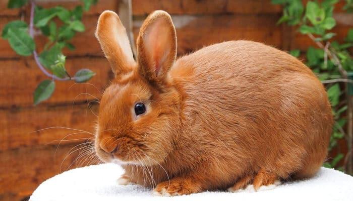conejos-para-ninos-8