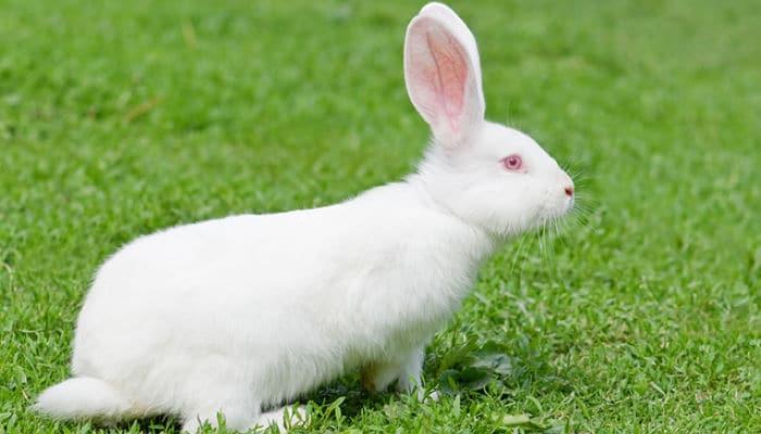 conejos-para-ninos-9