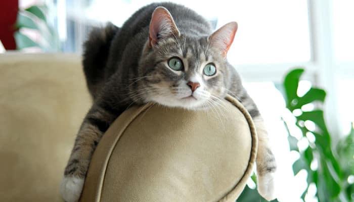cómo evitar que los gatos arañen el sofá