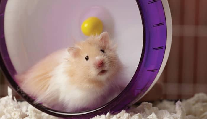como-hacer-juguetes-para-hamsters-1
