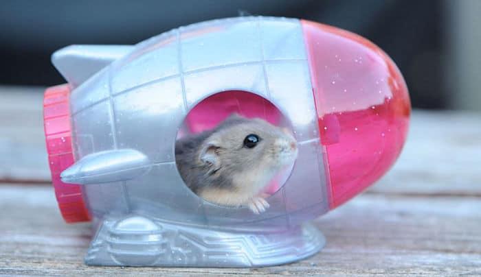como-hacer-juguetes-para-hamsters-2