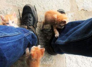 gatos que atacan a sus dueños