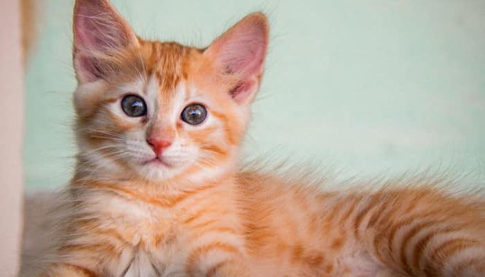 anatomia de los gatos
