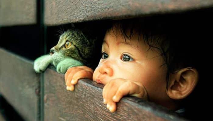 los gatos son buena compañía para los niños