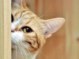 que pueden hacer los gatos