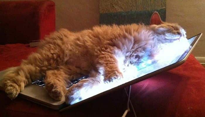 las cosas que pueden hacer los gatos