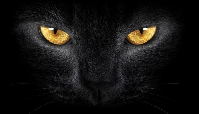 razones del porque los ojos de los gatos brillan