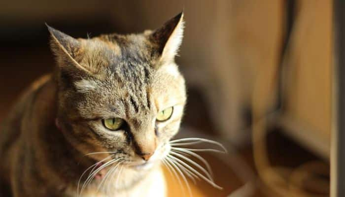 baba con mal olor en gatos