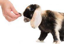 entrenar a un conejo