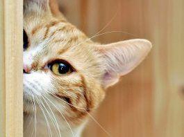 mal olor en gatos