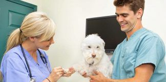 odontología en perros y gatos