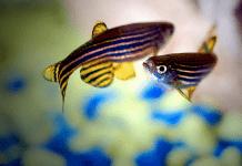 peces para principiantes