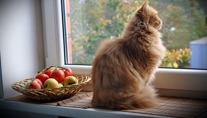 los gatos adultos tienen distintas necesidades