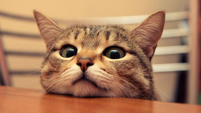 Esta pendiente de los cambios de hábitos de tu gato