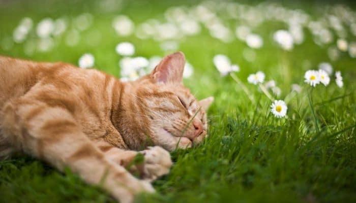 suministra a tu gato un espacio con sombra