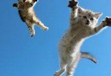 golpes internos en gatos