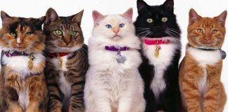 que debo saber de los gatos
