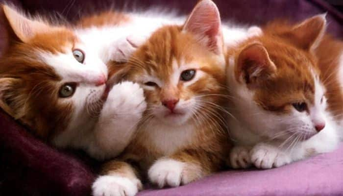 comunicate con tu gato y entiendelo
