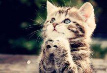 que dicen los gatos